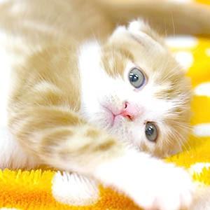 refs.jpかわいい子猫