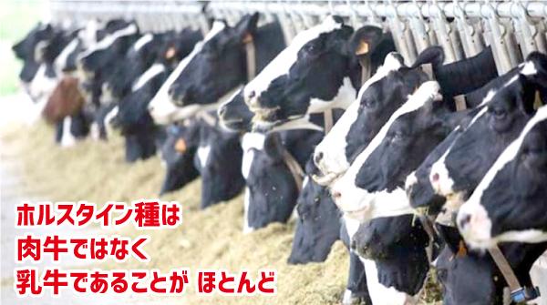 肉牛乳牛違い