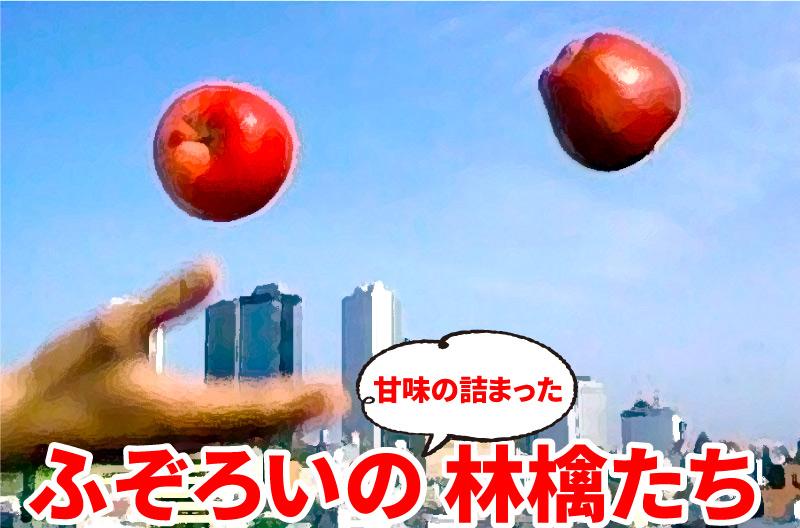 ふぞろいの林檎たち
